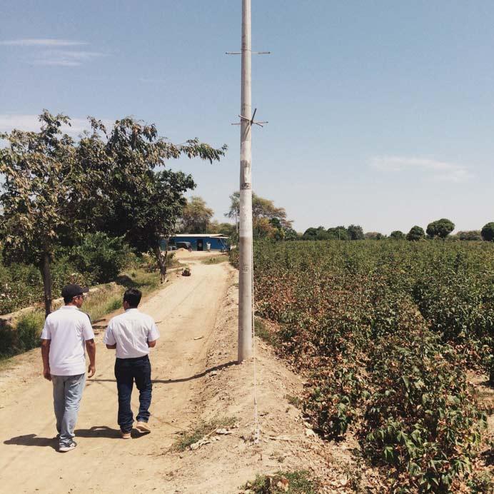 2 men in a cotton field